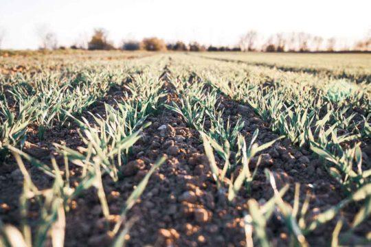 CENTRAL-SEGUROS-agroseguros-seguros-agricolas